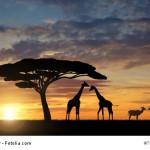 Klima und beste Reisezeit Kenia