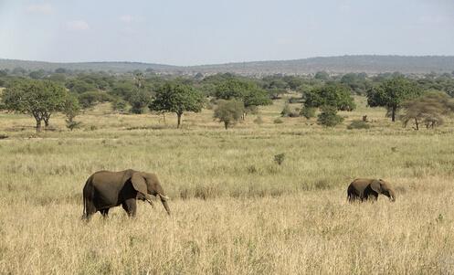 #Klima und beste Reisezeit Tansania#